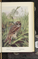 Portraits and Habits of Our Birds-1 0085-scan.png