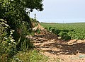 Potato Field - geograph.org.uk - 188893.jpg