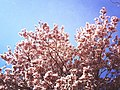 Primavera verao.jpg