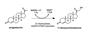 21-Hydroxylase - Reaction scheme showing hydroxylation of progesterone