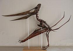 https://upload.wikimedia.org/wikipedia/commons/thumb/8/8c/Pteranodon-Triebold-72.jpg/250px-Pteranodon-Triebold-72.jpg