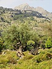 Puig Major from Vall d'Albarca.jpg