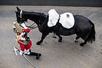 QUEENS CAVALRY READY FOR SUMMER OF CEREMONIAL MOD 45162396.jpg