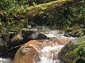 Quebrada de agua pura en Janeiro, Buga.JPG