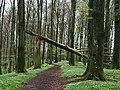 Rövarekulan trail.jpg