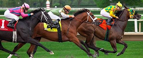 Three Thoroughbreds racing