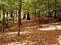 Radevormwald Kollenberg - Kollenbergpark 01.jpg