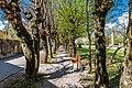 Radovljica Gorenjska cesta Park Buchen-Allee 10042017 7451.jpg