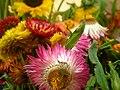 Ramo de flores - panoramio.jpg
