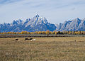 Ranchinginthetetons.jpg