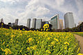 Rape blossoms field and shiodome skyscrapers.JPG