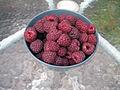 Raspberries (4960808060).jpg