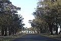 Rawsonville NSW 2830, Australia - panoramio (7).jpg