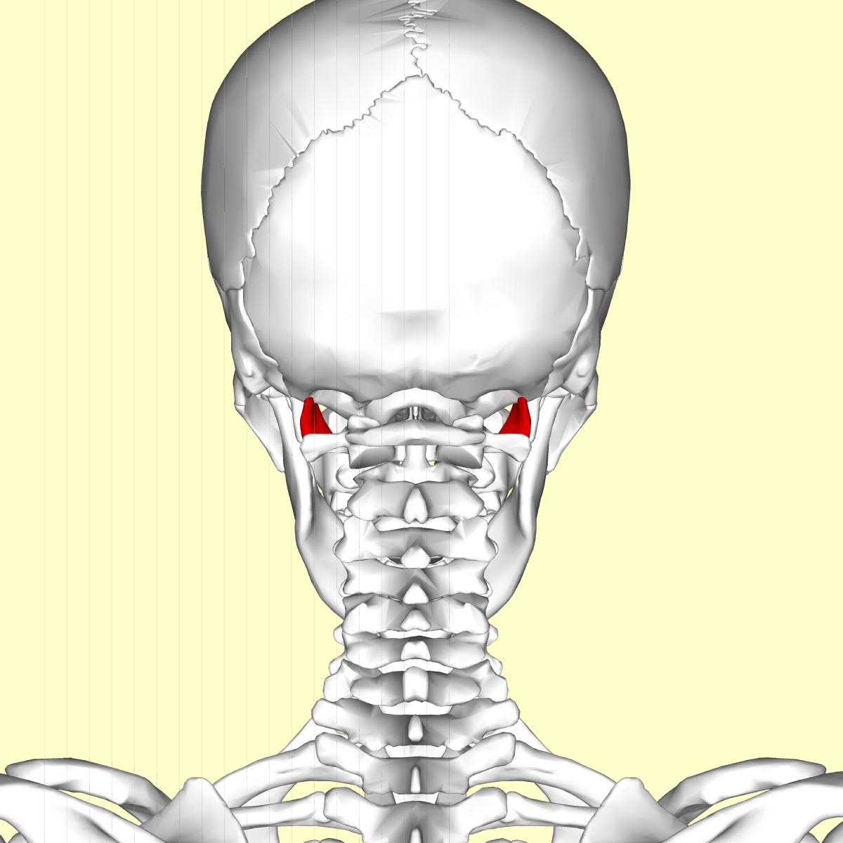 Rectus capitis lateralis muscle - Wikipedia