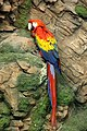 Red-macaw.jpg