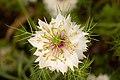 Redcliffe Botanical Gardens Herbs-026+ (245274252).jpg