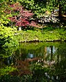 Reflections of the Spring vegetation in the Japanese Gardens at the Ft. Worth Botanic Gardens.jpg
