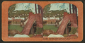 Refugees snug camp in the shades of Columbia Park, San Francisco fire-swept disctrict, from Robert N. Dennis collection of stereoscopic views 2.png