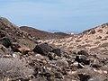 Relief et végétation de l'île de Los Lobos.JPG