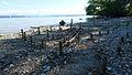 Relikte ehemaliger Pfahlbauten auf der Roseninsel.jpg