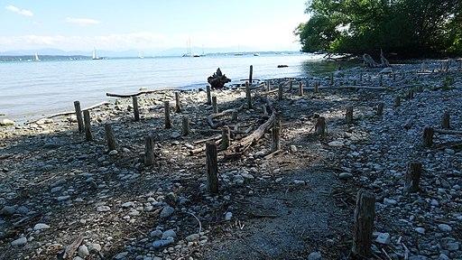 Relikte ehemaliger Pfahlbauten auf der Roseninsel