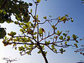 Repulse Bay tree.jpg