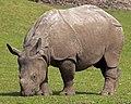 Rhino 2 (4506423770).jpg