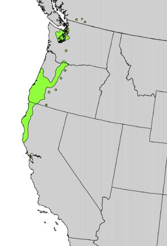 Rhododendron macrophyllum - Image: Rhododendron macrophyllum range map