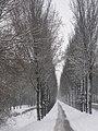 Rijkerswoerdsestraat in winter.jpg