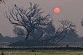 Rising sun at Bharatpur.jpg