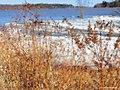 River Reeds (255668777).jpeg