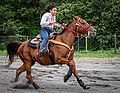 Rodeo in Panama 41.jpg