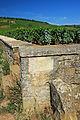 Romanée-Conti vineyard.jpg