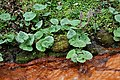 Rombergpark-100330-11318-Bachlauf-Pflanzen.jpg