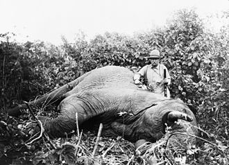 Elephant gun - Theodore Roosevelt with large-caliber rifle and dead elephant