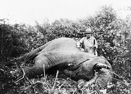 Roosevelt standing next to the elephant he shot on safari Roosevelt safari elephant.jpg