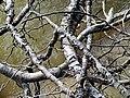 Roots Parkers Creek Jordan Lake NC SP 3819 (36009137821).jpg