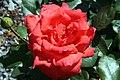 Rosa Bing Crosby 0zz.jpg