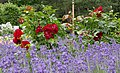 Rosarium Baden Doblhoffpark Schlossparterre 01.jpg
