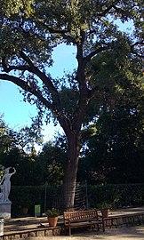 Roure c Jardins de la Tamarita - 0133-05-97.jpg