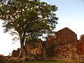Ruínas da Igreja de São Miguel Arcanjo com árvore.JPG