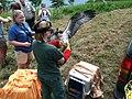 SM Ospreycam 2013-07-09 (004) intervention Smith Mountain Lake State Park (9262154989).jpg