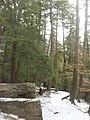 Salt Springs State Park (3283876201).jpg