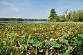 Sangchris Lake State Park - panoramio.jpg