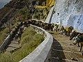 Santorin alter Hafen Esel donkey (24005144331).jpg