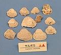 Scapharca subcrenata - Osaka Museum of Natural History - DSC07748.JPG
