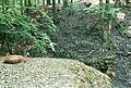 Schönbuch-Rotwild.jpg