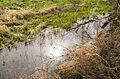 Schlangen - 2015-04-12 - LIP-001 Strothe-Niederung (24).jpg