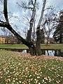 Schlosspark Graupappel.jpg