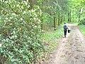 Schlosspark Wiesenburg - Rhododendronbluete (Wiesenburg Palace Park - Rhododendrons) - geo.hlipp.de - 36428.jpg